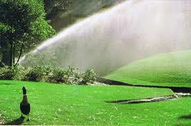 Sprinklers 84120